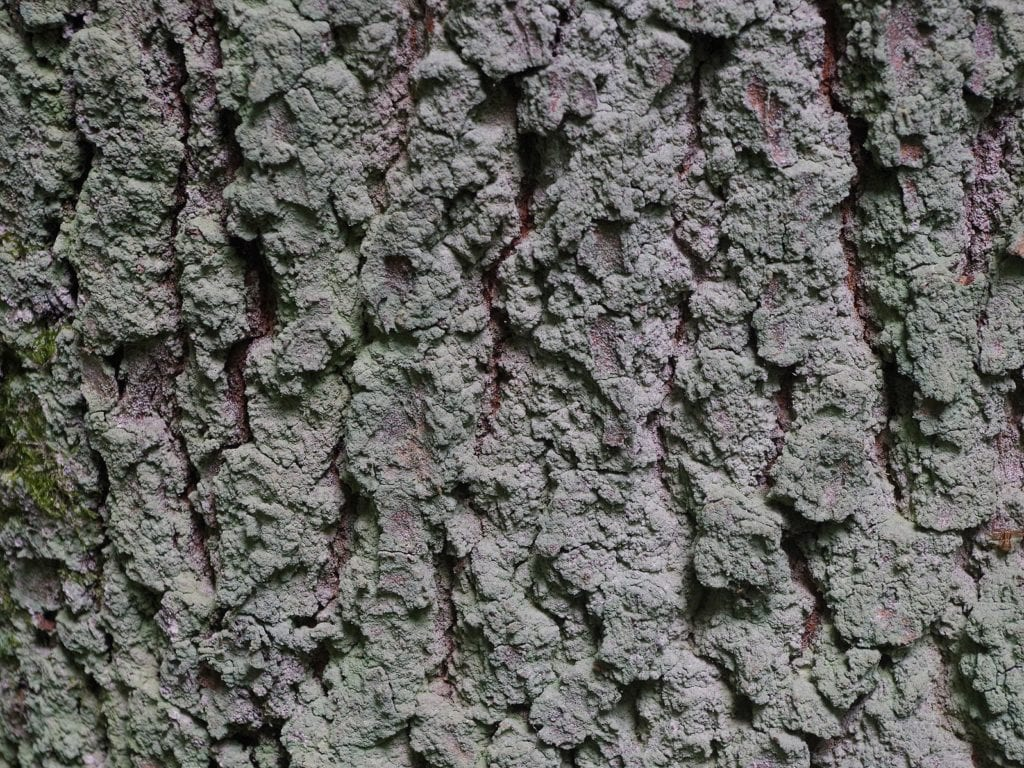 What Can Lichens Tell us About Air Quality?