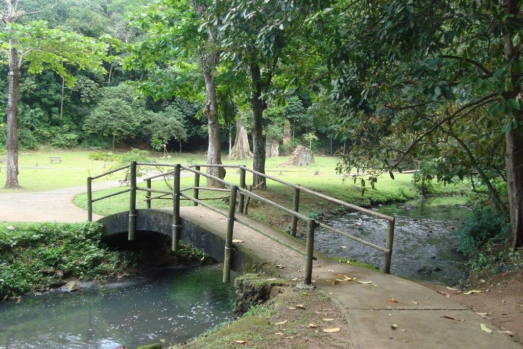 A Sacred Leaf Garden in Pedra de Xangô