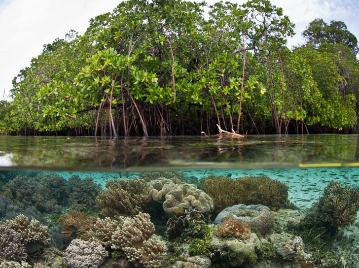Are Mangroves Ecosystems the Richest Carbon Storage?