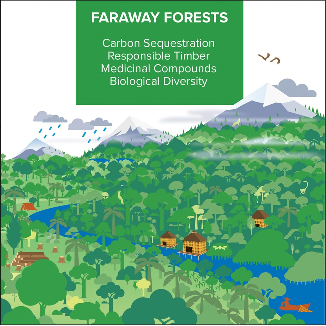 Faraway Forests | Cities4Forests