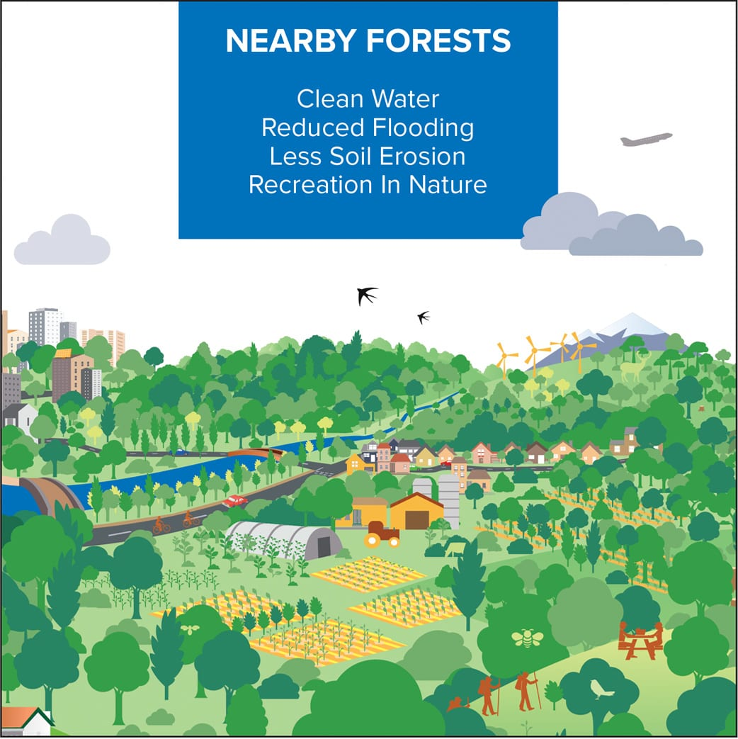 Nearby Forests | Cities4Forests