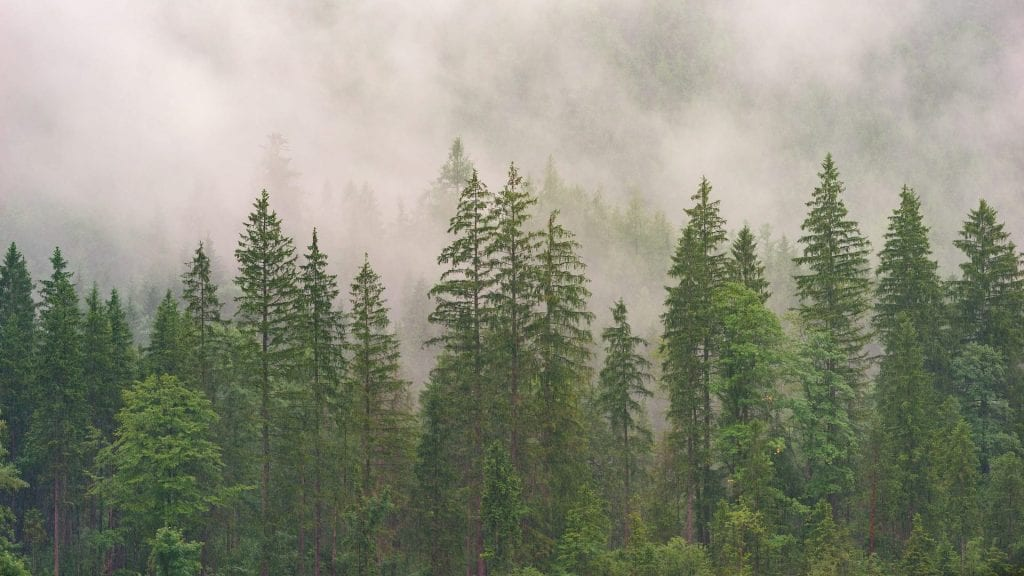 Forests Simply Provide Better Health